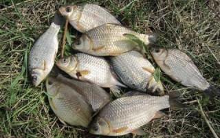 Особенности ловли карася весной на фидер – тактика рыбалки, поиск, прикормка, оснастка и насадки