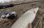 Особенности ловли щуки в апреле на спиннинг или живца