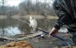 Особенности ловли карася весной — правильная тактика и снасти