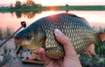 Карась в апреле – ловля на поплавочную удочку, фидер и донки