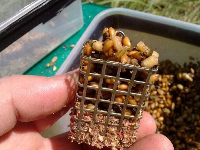 Пареная пшеница