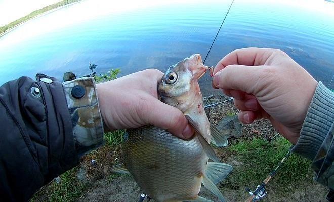 Рыбалка на леща