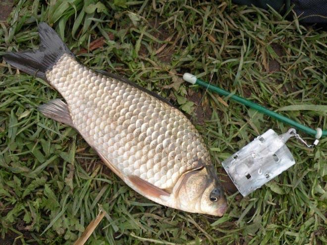 Противозакручиватель с рыбой