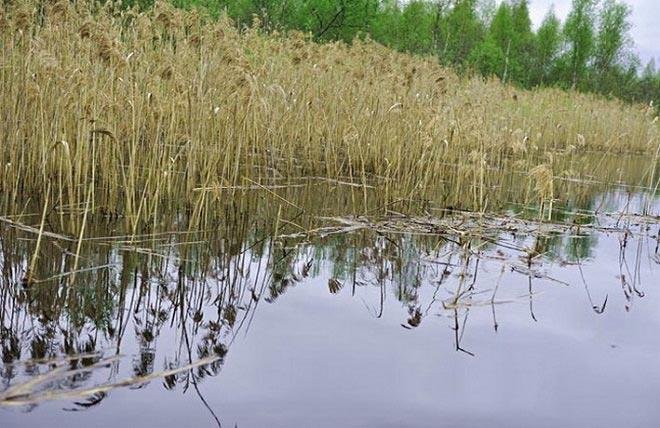 Ловля щуки в апреле на пруду