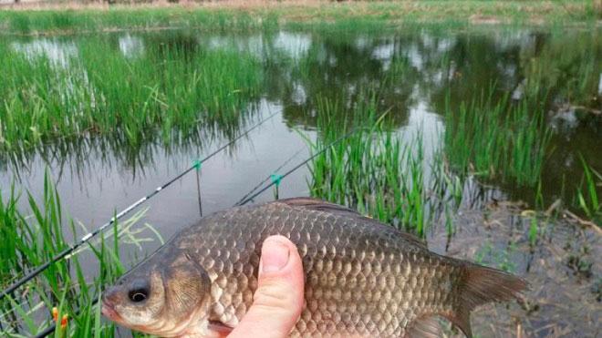 Рыбалка на карася в мае